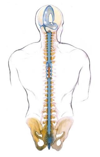 spinal column and kundalini