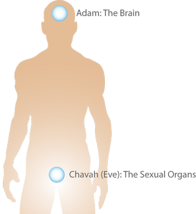 Adam and Eve can represent the brain and sex