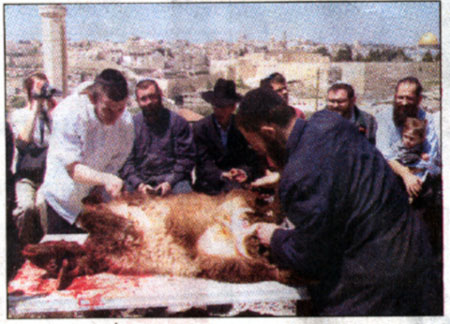 animal sacrifice