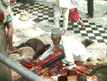 nepal animal sacrifice
