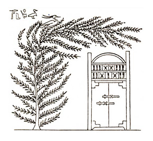 The coffin of Osiris protected by the acacia tree