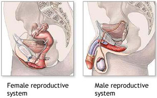 the sexual organs are the basis of creation